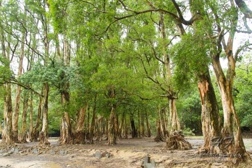 Shing Mun Reservoir(城門水塘)-06