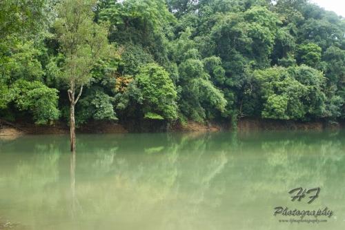 Shing Mun Reservoir(城門水塘)-07