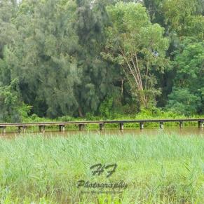Hong Kong Wetland Park(香港濕地公園)-09